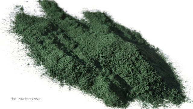 Nuns grow spirulina for malnourished children – You can grow this superfood at home